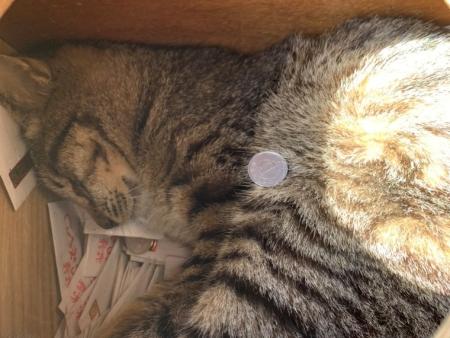 おみくじ箱から見える猫ちゃんアップ