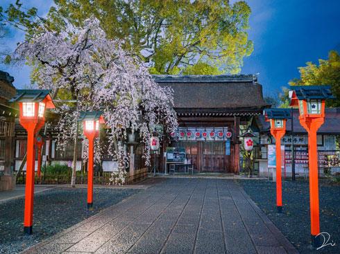 Twitter ハッシュタグ #ツイッターお花見2020 桜 写真