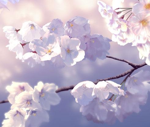 桜 イラスト 絵 見れないなら描けばいいじゃない リアル 美しい 花見 自粛 マクー