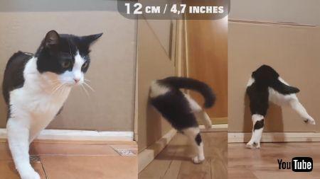 狭い穴に挑むネコちゃん