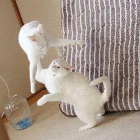 猫 ストーブ 点いてます? 寒い 待機 リリー 北海道 しんばぷー