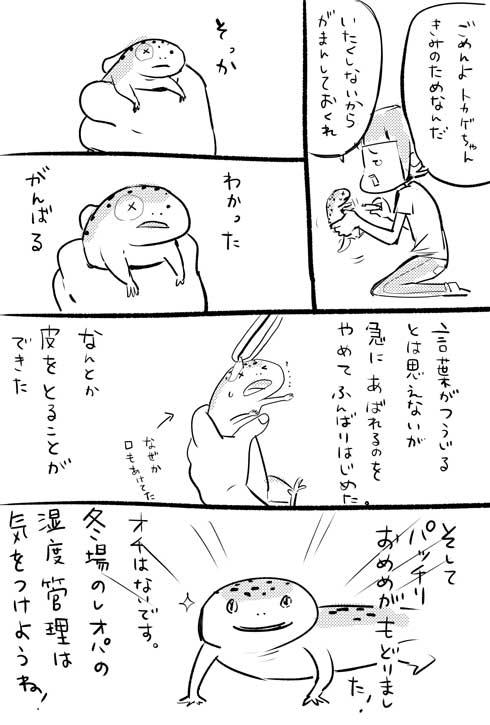 漫画 イラスト 松本ひで吉 トカゲ ヒョウモントカゲモドキ かわいい