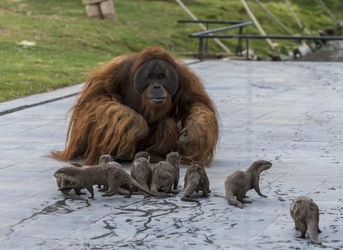 Pairi Daiza動物園