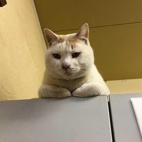 長い 猫 ねこ 桶川スポーツランド 元気出る 写真