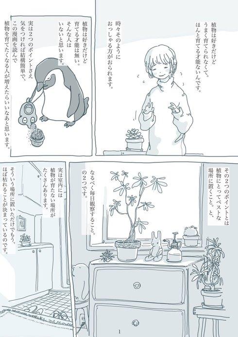 観葉植物と暮らす上で大切なたった2つのこと01