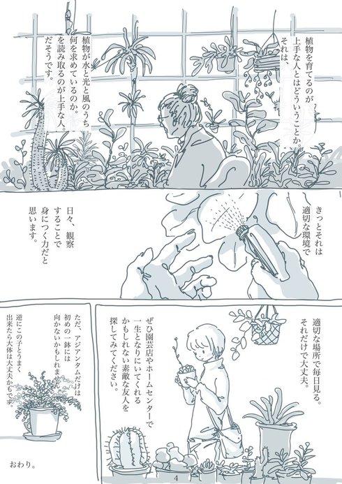 観葉植物と暮らす上で大切なたった2つのこと04