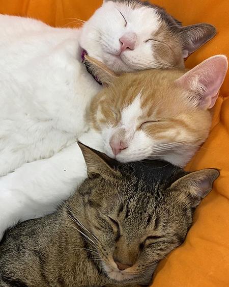 3連猫ちゃん