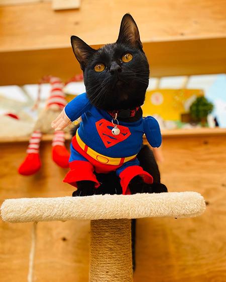 かわいいスーパーマン