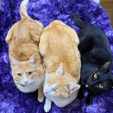 猫ちゃん3匹横並び