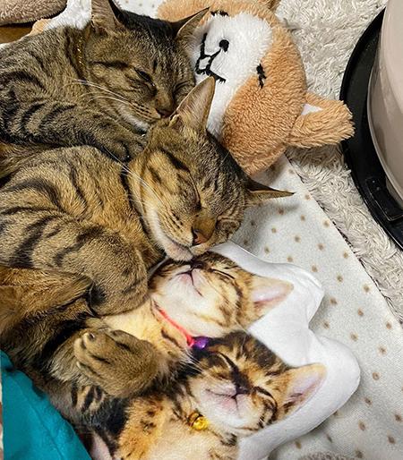 クッションと一緒に眠るイトさんとバンさん