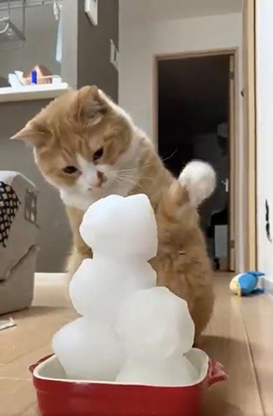 雪だるまと猫