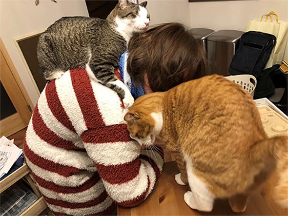 猫にぼこぼこ