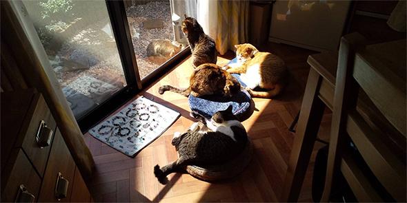 猫4匹で日向ぼっこ