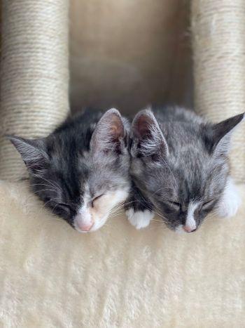 かわいすぎるお昼寝ネコちゃんたち