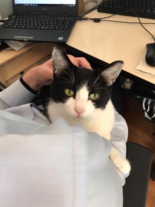 在宅勤務と猫