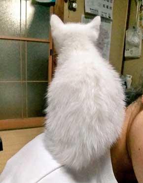 子猫 かわいい 我慢出来ん 見てくれ 俺の猫 白猫 2匹