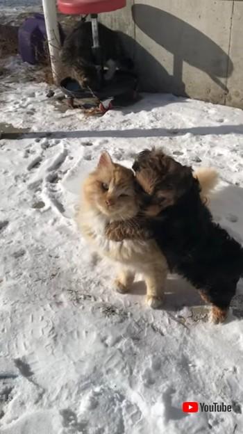 Enjoys Company of Playful