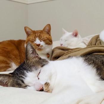 3匹でお昼寝