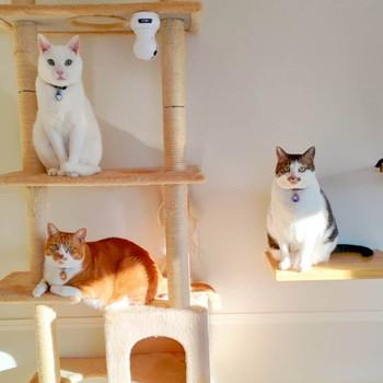 3匹のネコちゃん