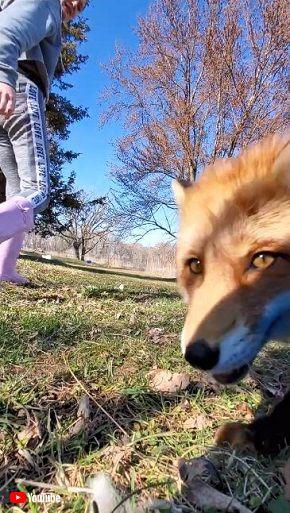 撮影中のスマホをペットが盗んでダッシュ キツネ目線の疾走感がすごい
