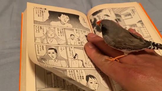 漫画を読む?ピヨ彦さん