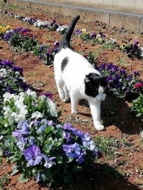 花壇 ネコ ヌンヌン