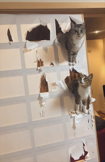 ココニャさんちの猫ちゃんたち