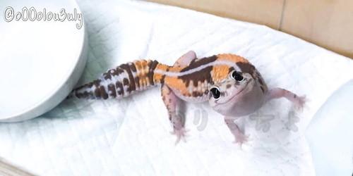 脱皮するトカゲがかわいい