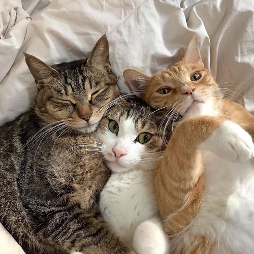 くっついて眠る3匹