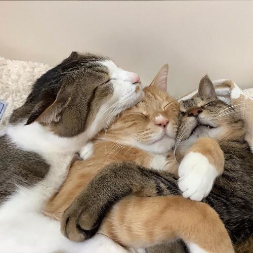 抱き合って眠る3匹