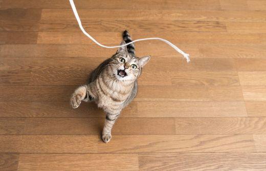 ペット手帳 猫 コード
