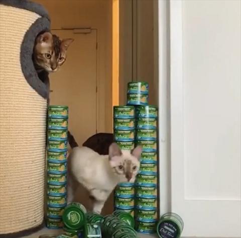 ツナ缶ジャンプ