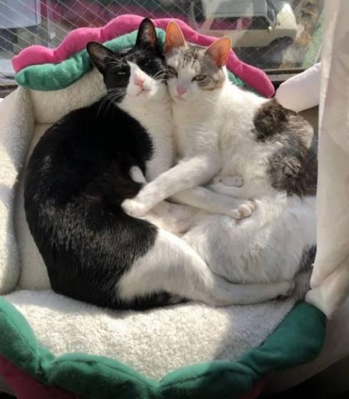くろまめ とうふ 猫 大豆姉妹
