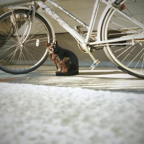 自転車と猫ちゃん