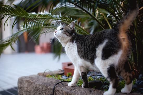 見上げる猫ちゃん