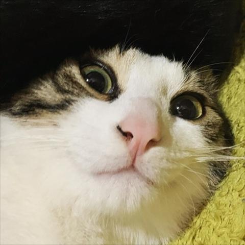 猫のくろもさん
