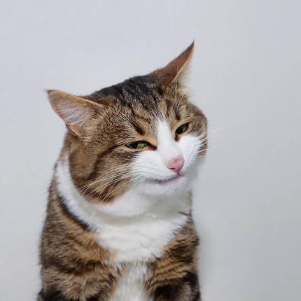 多彩な表情のネコちゃん