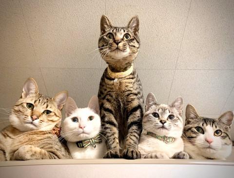 上から猫圧