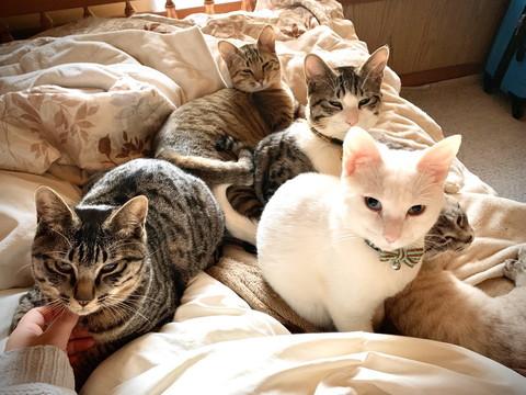 朝日を浴びるネコちゃんたち
