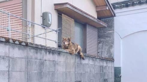 塀の上 イヌ