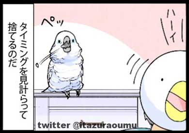 オウムも気を使っている 捨てる いたずらオウムの生活雑記 ろう 飼い主 漫画 オウム