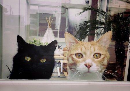 本棚 猫 発見