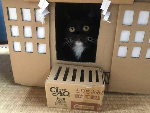 コロナ終息を願って 猫神社 河鍋暁斎 猫 賽銭箱 ダンボール 熱海 Muddy Cat