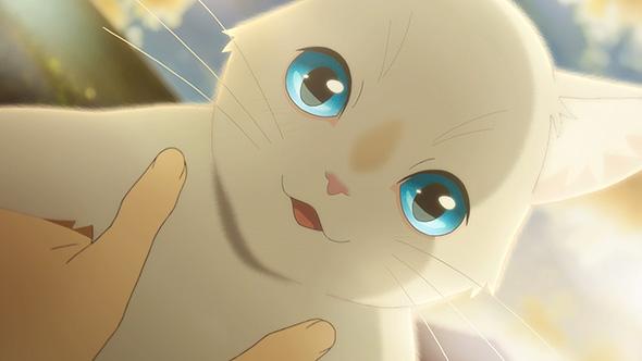 泣きたい私は猫をかぶる Netflix 劇場公開延期 配信 スタジオコロリド 佐藤順一 志田未来 花江夏樹