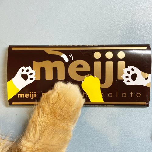 チョコと猫ちゃんの手