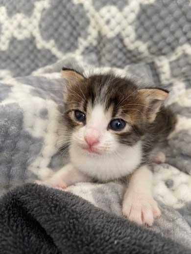 かわいい 猫 28秒 保護 子猫 2匹 ペットボトル 成長記録