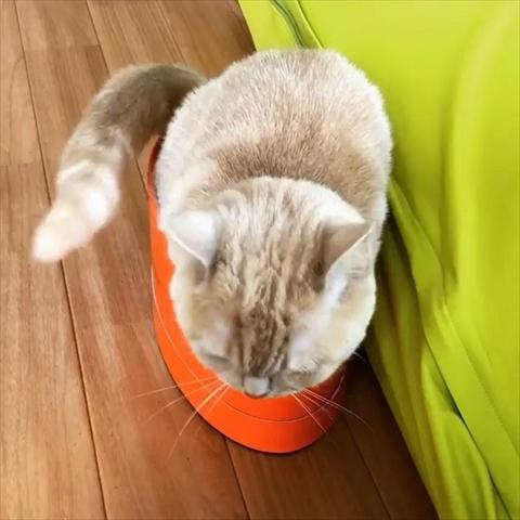 自動巻取り猫ちゃん