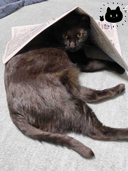 黒猫ろん 漫画 飼い主 体調 弱った心にしみる 黒猫ろんと暮らしたら