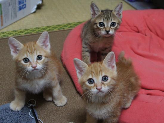 小さい頃の3兄弟