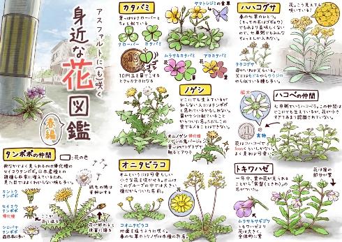 アスファルトに(も)咲く身近な花図鑑